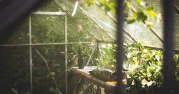 Lille mini drivhus til den entusiastiske hobbygartner